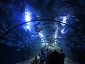 The tunnel at the aquarium in Valencia