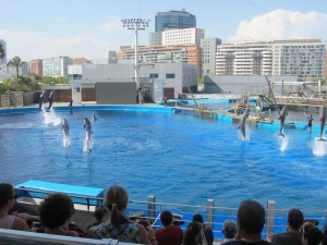 The dolphin show at the aquarium in Valencia